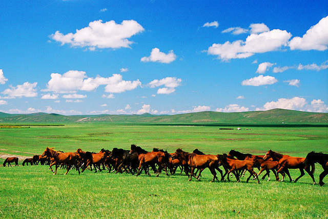 agriculture-pasture-grassland-mammal-grass picture material