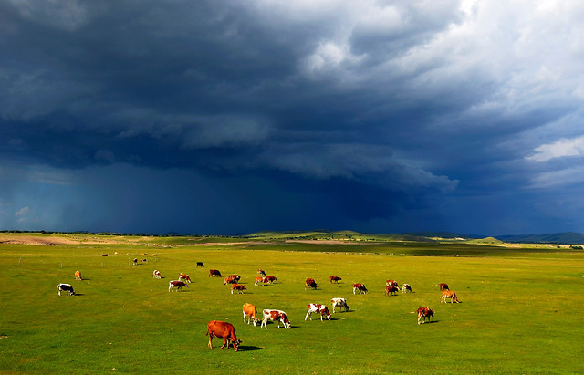 no-person-agriculture-pasture-pastoral-rural 图片素材