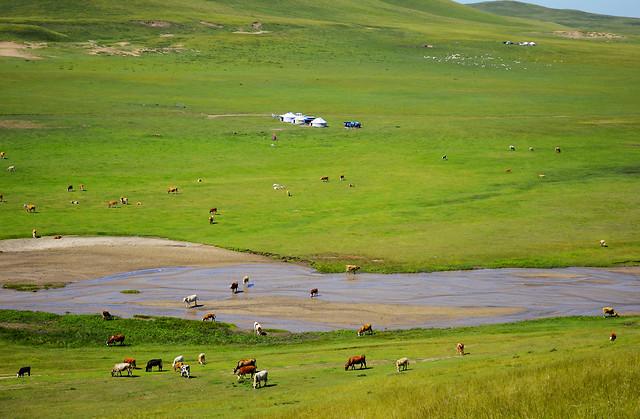 no-person-landscape-sheep-grassland-grass picture material