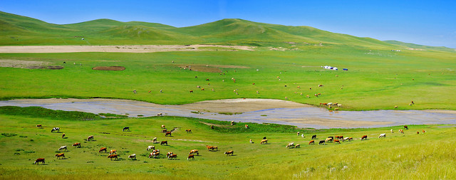 nature-no-person-grass-grassland-landscape 图片素材