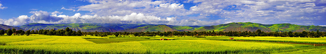 field-landscape-panoramic-sky-nature picture material