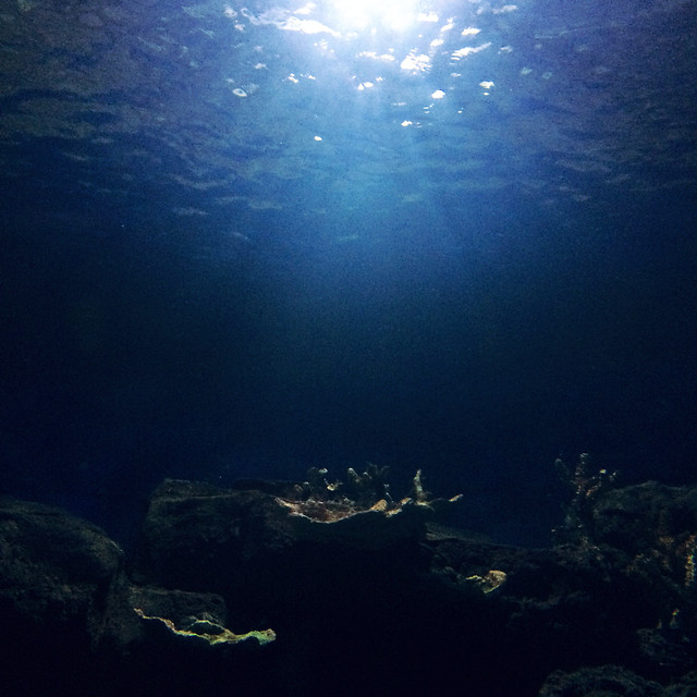 underwater-fish-ocean-sea-water picture material