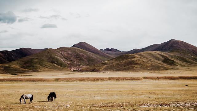 no-person-landscape-travel-mountain-sheep picture material
