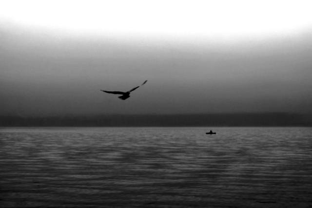 sea-water-ocean-bird-beach picture material