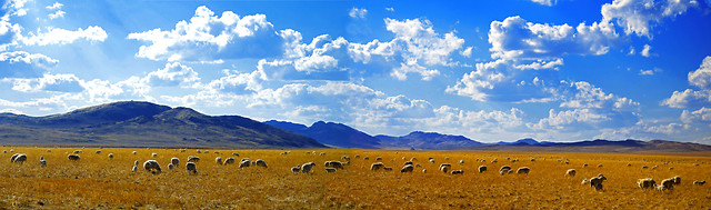 landscape-agriculture-grassland-sky-no-person picture material