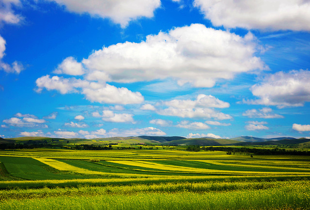 landscape-rural-field-no-person-agriculture picture material