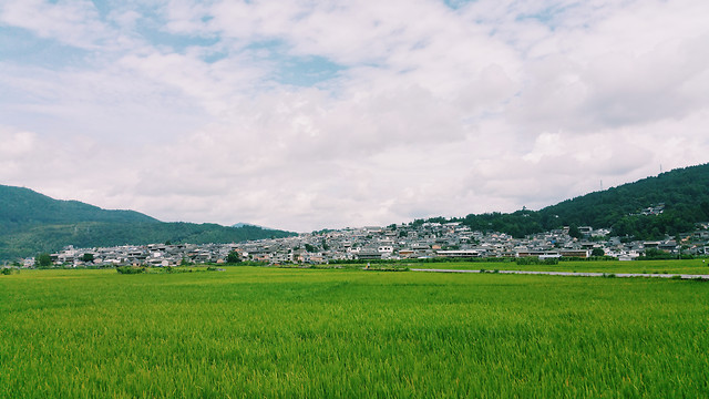 agriculture-landscape-farm-field-rice picture material