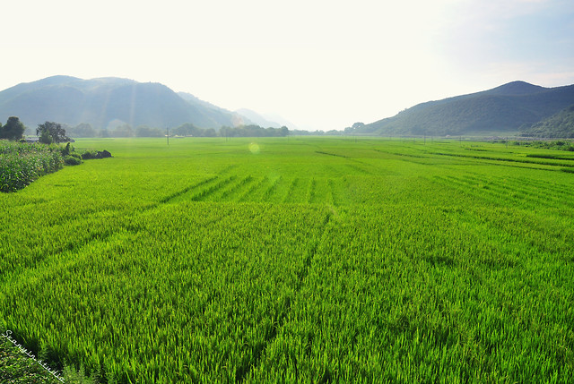 field-landscape-rural-agriculture-grass picture material