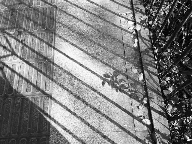 no-person-architecture-glass-items-black-black-white picture material