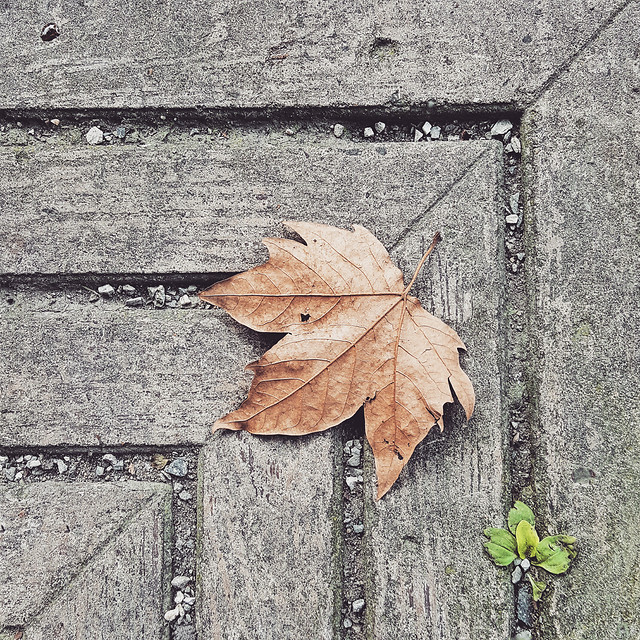 leaf-fall-wood-no-person-tree picture material
