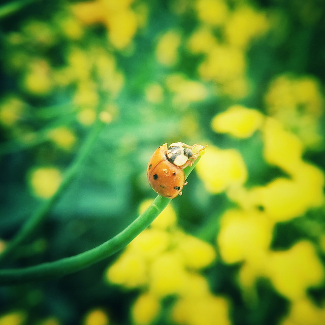 insect-nature-flora-leaf-biology picture material