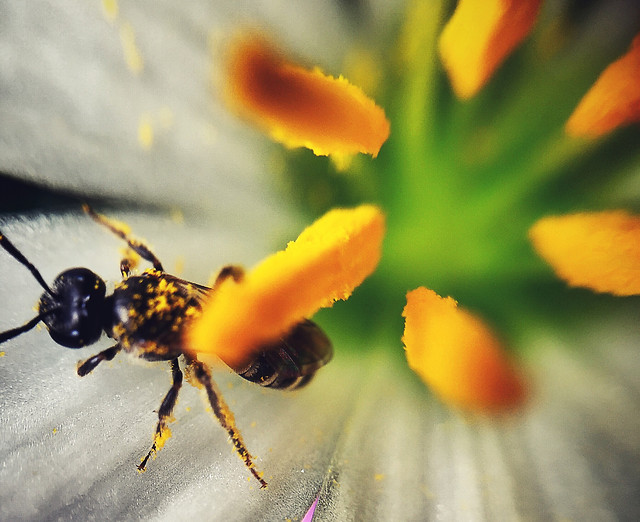 insect-nature-no-person-flower-outdoors picture material