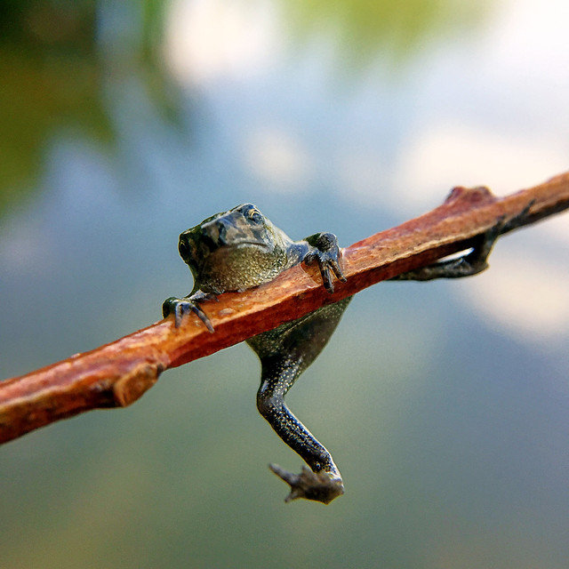 wildlife-no-person-insect-nature-animal picture material