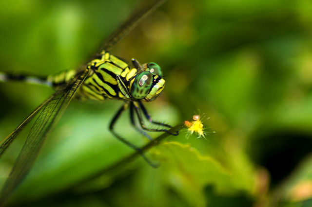 insect-nature-wildlife-dragonfly-no-person picture material
