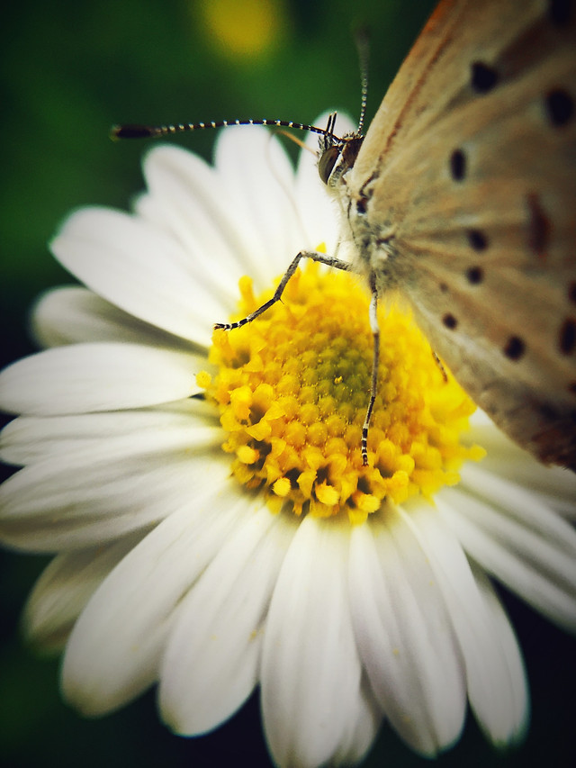 insect-butterfly-nature-flower-no-person picture material
