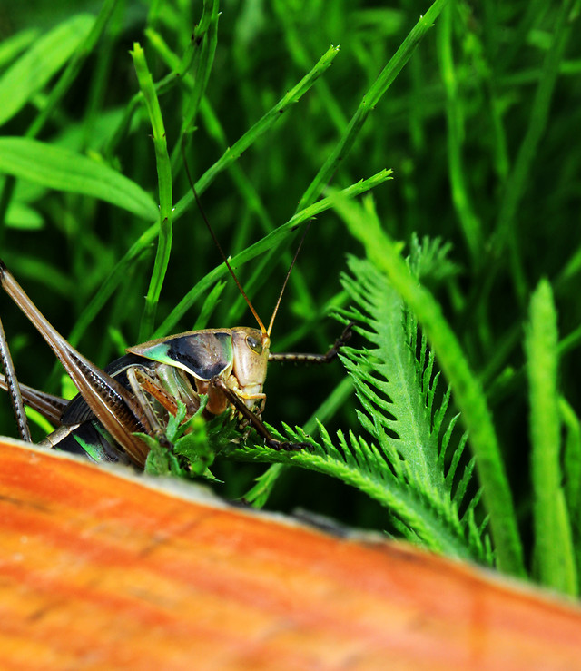 nature-insect-no-person-outdoors-leaf picture material