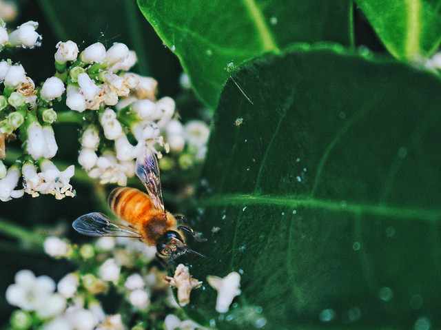 insect-bee-nature-flower-no-person picture material