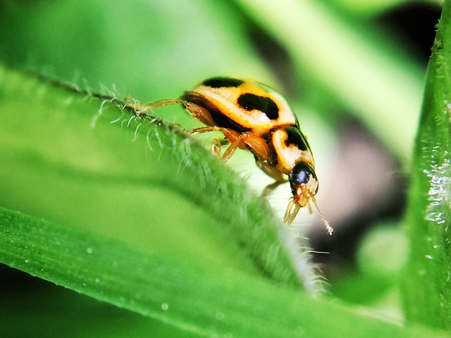 insect-nature-leaf-wildlife-animal picture material