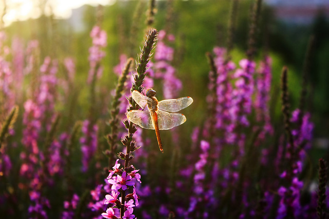 flower-no-person-nature-summer-wild picture material