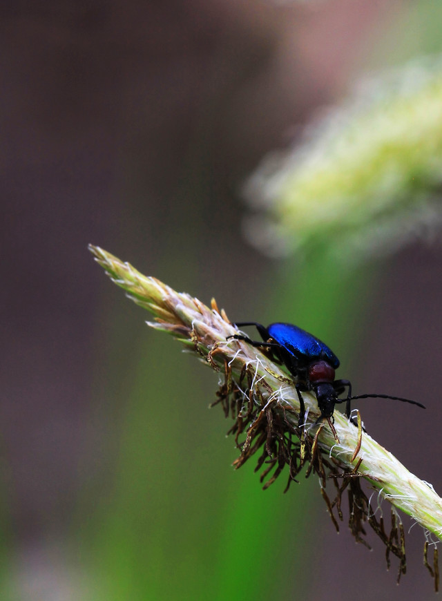 insect-nature-wildlife-no-person-outdoors picture material