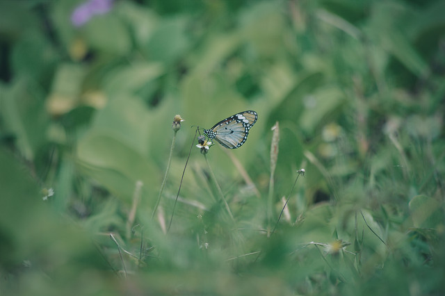 butterfly-nature-insect-summer-wildlife picture material