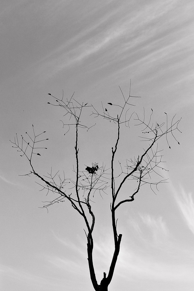 landscape-silhouette-nature-tree-sky picture material