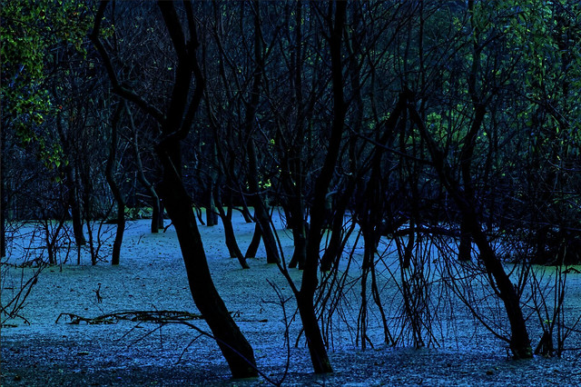 tree-water-dawn-nature-no-person 图片素材