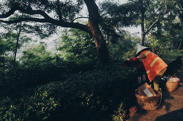 tree-wood-people-one-land-vehicle 图片素材