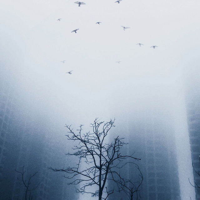 fog-mist-winter-tree-nature picture material