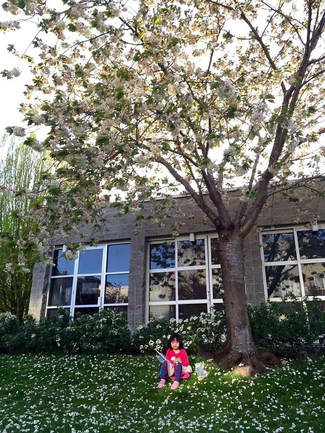 flower-tree-garden-plant-park 图片素材