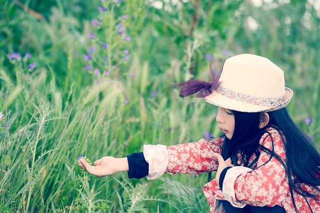 nature-grass-field-summer-hayfield 图片素材