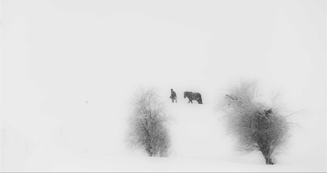 winter-snow-fog-black-white-tree 图片素材