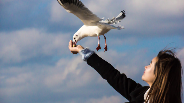bird-nature-sky-freedom-flight picture material
