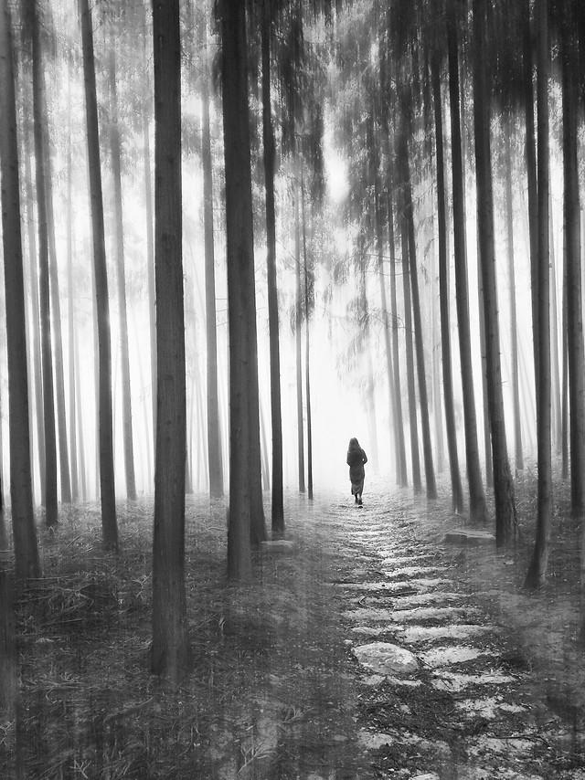 no-person-tree-black-black-white-fog picture material