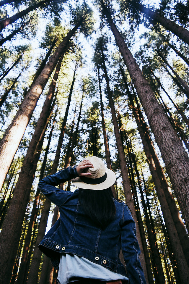 wood-tree-nature-outdoors-people picture material