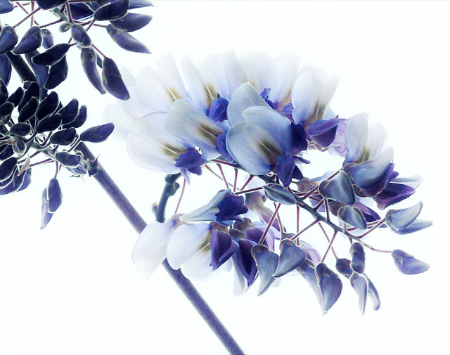 flower-flora-nature-floral-blooming picture material