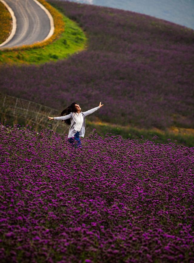 flower-landscape-purple-field-no-person picture material