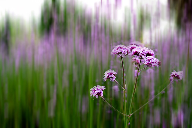 nature-no-person-flower-summer-flora picture material