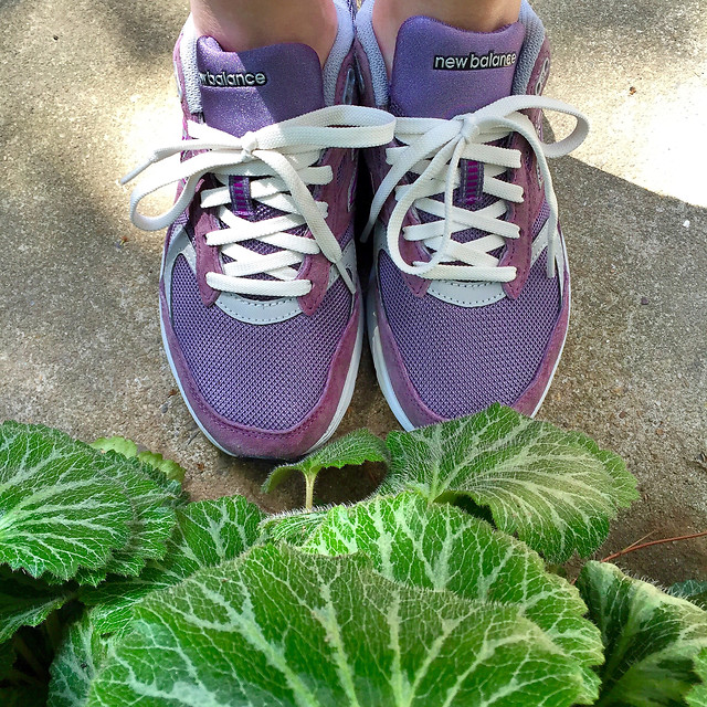 shoe-foot-footwear-couple-together-summer picture material