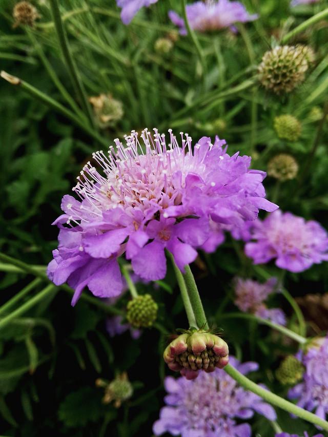 flower-nature-flora-garden-blooming 图片素材