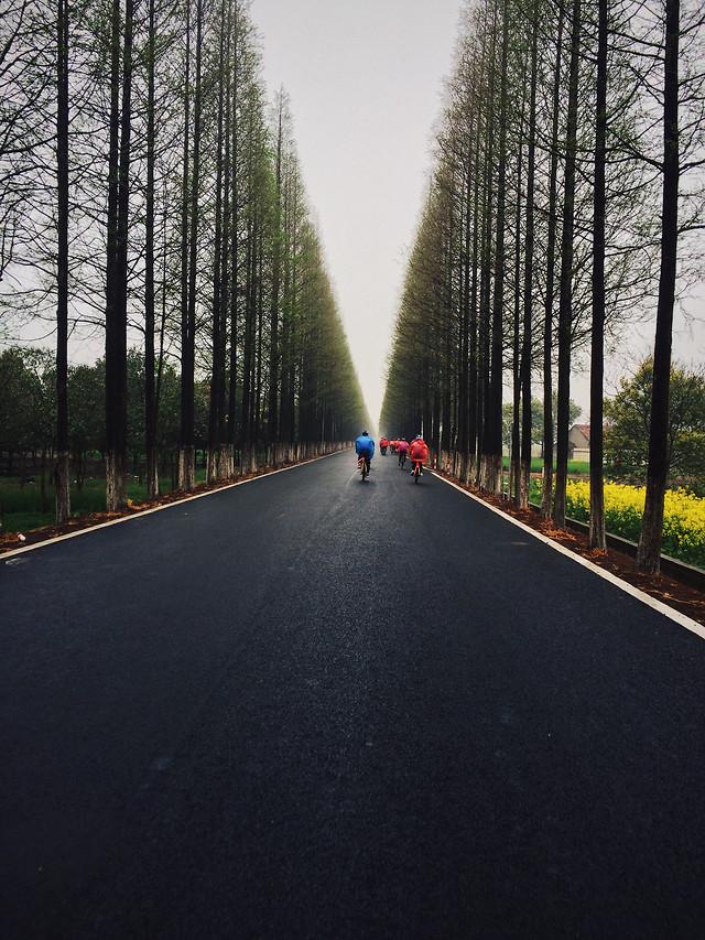 road-no-person-asphalt-lane-nature 图片素材