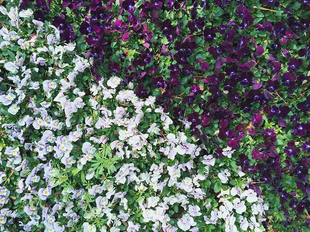 flower-flora-leaf-garden-floral picture material