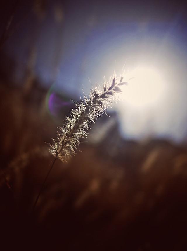 sunset-sun-blur-light-dof picture material