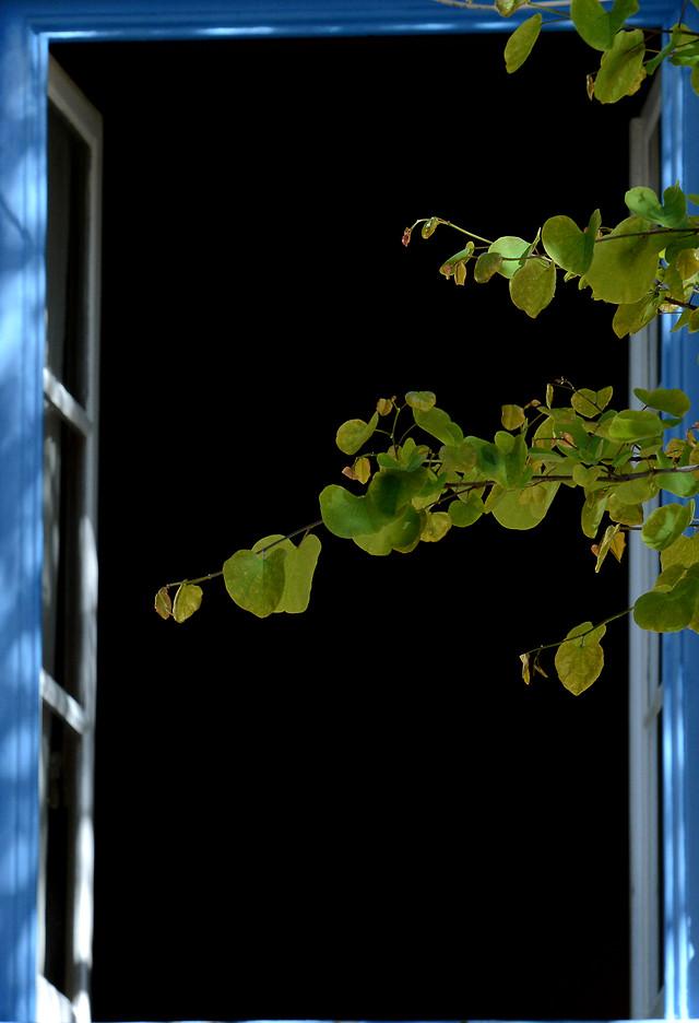 leaf-desktop-flora-vine-green picture material