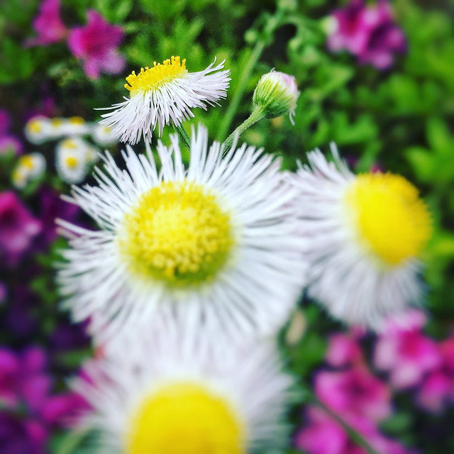 flower-flora-nature-floral-garden picture material