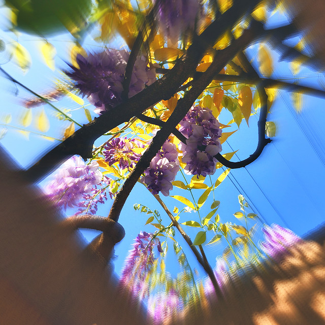 flower-blur-tree-color-light picture material