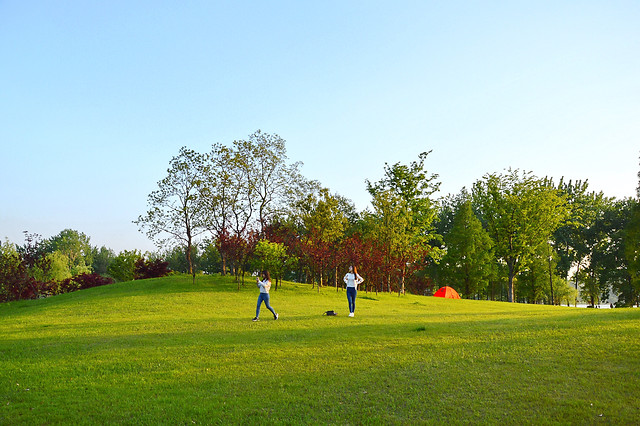 golf-grass-landscape-tree-sky 图片素材