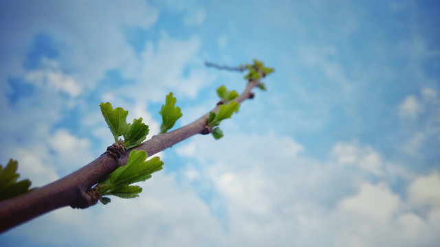 tree-leaf-sky-no-person-nature picture material