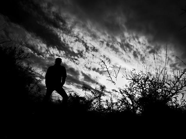 monochrome-silhouette-sky-landscape-tree picture material