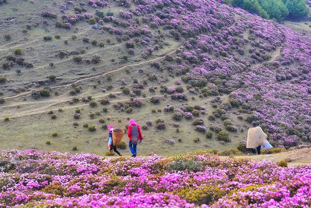 flower-landscape-nature-lavender-color-outdoors 图片素材